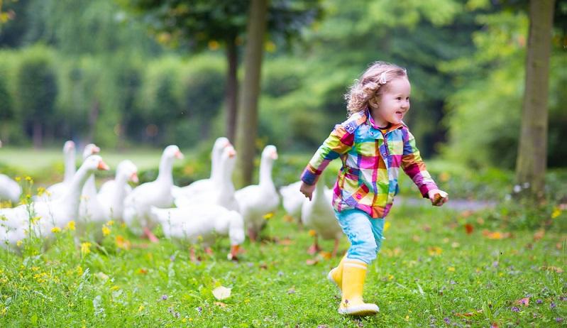 Bauernhöfe haben bereits an sich einen Charme, doch häufig handelt es sich um Höfe, die richtig betrieben werden. Hier ist nicht ausreichend Zeit und auch keine sichere Umgebung, um dort mit Kindern Urlaub zu machen.  ( Foto: Shutterstock- FamVeld )