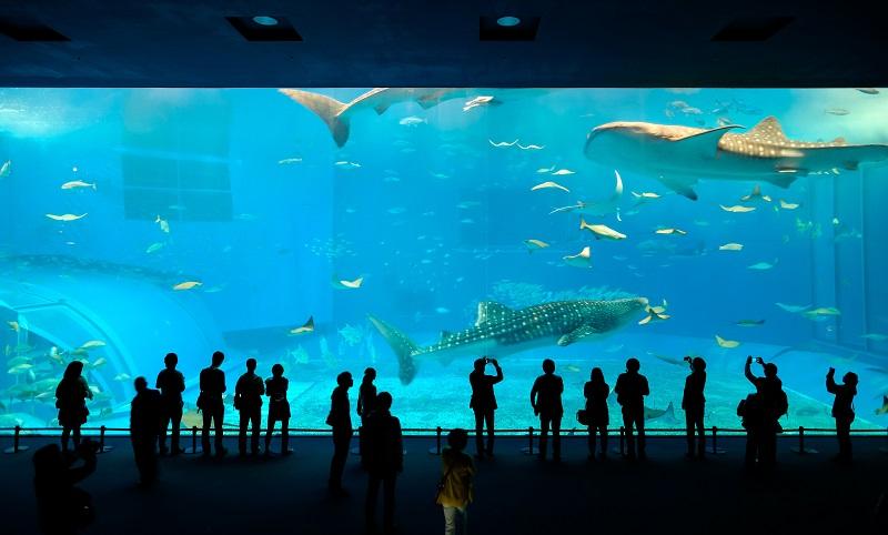 Die Schönheit des Lebens unter Wasser entdecken Sie mit Ihren Kindern im Sea Life. (#02)