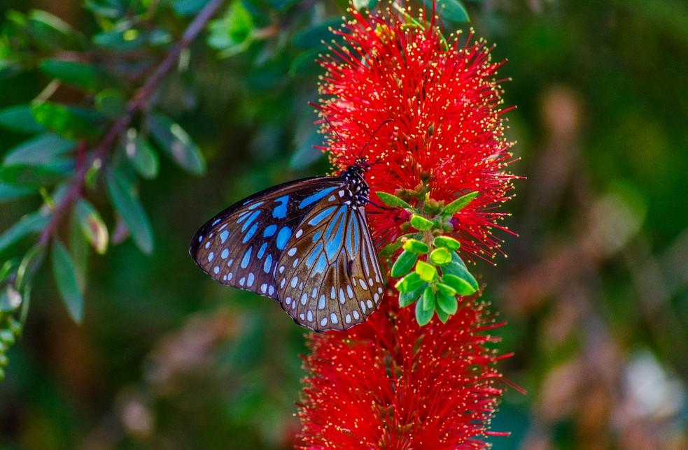 Tagpfauenauge und Kleiner Kohlweißling  und so manch anderer bunter Flattermann stehen im Schmetterlingshaus von Cervia bereit, den Kinderaugen die farbenfrohe Vielfalt der Natur zu zeigen. Der Weg von Ihrer Unterkunft zum Schmetterlingshaus ist nie sehr weit. Das schmetterlingshaus ist jedoch ein Ort für die ganze Familie, nicht nur für die Kleinen. (#4)
