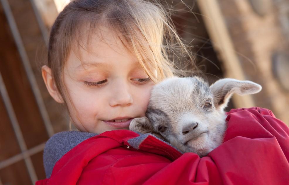 Genauso wichtig wie die Unterkunft für die Familie: In Cervia bietet gerade der Streichelzoo im Naturpark viel Unterhaltung. Wer so eine kleine Ziege umarmen darf, wird sich glücklich fühlen. (#2)