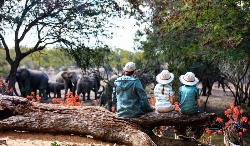 Kinder werden große Augen machen, wenn sie Elefanten, Antilopen, Nashörner und Co. in ihrem natürlichen Lebensraum beobachten können. (#01)