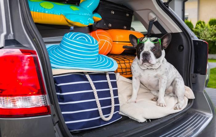 Die Reise mit Pkw ist für die Fellnase die verträglichste Art zu Reisen. (Foto: shutterstock - Patryk Kosmider)